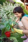 Lyckligt le mellersta arbeta i trädgården för ålderkvinna Arkivbilder