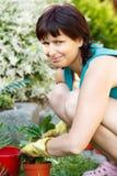 Lyckligt le mellersta arbeta i trädgården för ålderkvinna Arkivbild