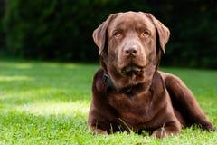 Lyckligt ligga för hund Royaltyfria Bilder