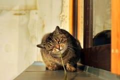 Lyckligt nyfiket gulligt spela för katt Royaltyfri Fotografi
