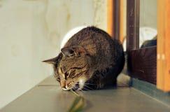 Lyckligt nyfiket gulligt spela för katt Fotografering för Bildbyråer