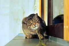 Lyckligt nyfiket gulligt spela för katt Arkivbilder