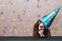 lyckligt nytt år för hund Arkivbilder