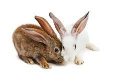 lyckligt nytt kaninår Arkivfoto