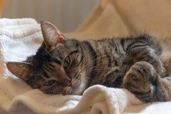 Lyckligt och vaknade precis upp katt arkivbilder