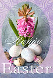 Lyckligt påskferiekort med den rosa hyacinten och easter ägg bakgrund färgrika easter Royaltyfri Bild