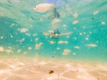 Lyckligt simma för ung kvinna som är undervattens- i det tropiska havet arkivbild