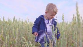 Lyckligt ungt pojkeanseende på fält med vete på den soliga dagen begrepp av den lilla bonden stock video