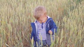 Lyckligt ungt pojkeanseende på fält med vete på den soliga dagen begrepp av den lilla bonden långsam rörelse arkivfilmer