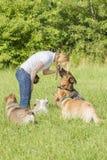 Lydnad för hundinstruktör arkivbilder