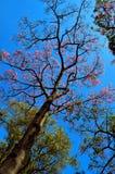 lyft upp trädet fotografering för bildbyråer