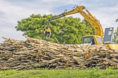 Lyftande journaler för tung maskin - som används för skogsavverkning i röjning/grävskopa Royaltyfri Foto