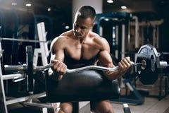 Lyftande vikt för ung vuxen kroppsbyggare i idrottshall Royaltyfria Foton