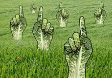Lyftt gräsplan som pekar händer i gräsfält arkivbild