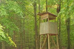 Lyftt okontrollerat i dimmig bokträdskog arkivbilder