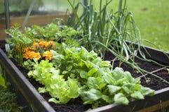 Lyftt säng med grönsaker royaltyfri fotografi