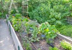 Lyftta Herb Garden Arkivbild