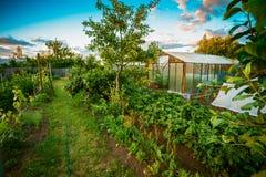 Lyftta sängar i grönsakträdgård Arkivfoton