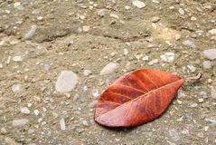 Lying autumn leaves on a cement floor Royalty Free Stock Photos