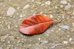 Lying autumn leaves on a cement floor Stock Image