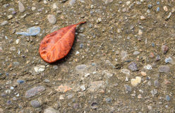 Lying autumn leaves on a cement floor Stock Images