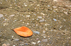 Lying autumn leaves on a cement floor Royalty Free Stock Image