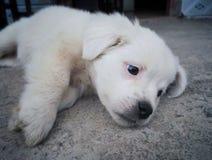 Lying baby dog. Baby dog lying on the ground in thinking something stock images