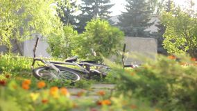 Lying bicycles in grass, daytime nature, trees pines no people. Stock footage stock video