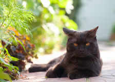 Lying black cat Royalty Free Stock Images