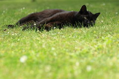 Lying black cat Royalty Free Stock Image
