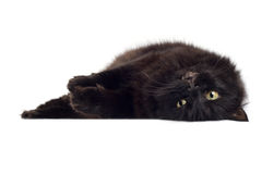 Lying black cat isolated Stock Images