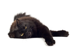 Lying black cat isolated Stock Photos