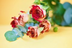 Lying bouquet of red roses with eucalyptus twig Royalty Free Stock Image