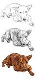 Lying Brown Dog Royalty Free Stock Photos