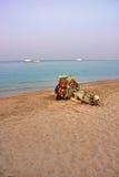 Lying camel are waiting new tourist season Royalty Free Stock Photo