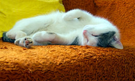 Lying cat. On the sofa Stock Photography