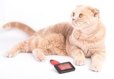 Lying cat and combing brush on the white background Stock Image