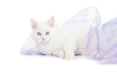 Lying cat Stock Photography