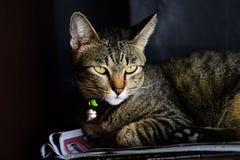 Lying cat stock image