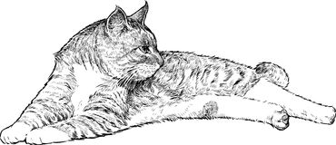 Lying cat. Vector drawing of a lying domestic cat vector illustration