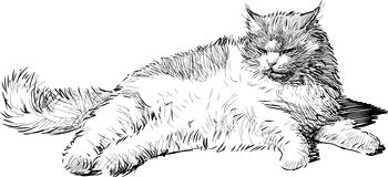 Lying cat. Vector drawing of the fat lying domestic cat vector illustration