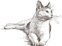 Lying cat. Vector sketch of the lying tomcat
