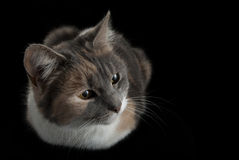 Free Lying Cat Watching On Isolated Black Background Stock Photography - 30864042