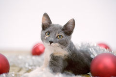 Lying christmas kitten stock photography