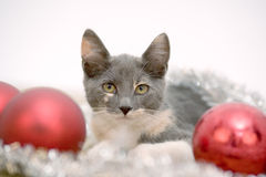 Lying christmas kitten Stock Photos