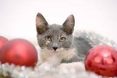 Lying christmas kitten stock photos
