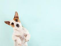 Lying dog Stock Image