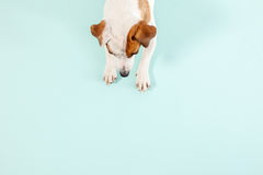 Lying dog Stock Photography