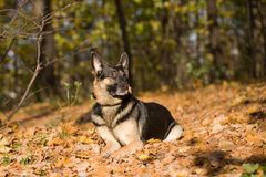 Lying dog in the forest Stock Image