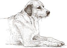 Lying dog Stock Photos